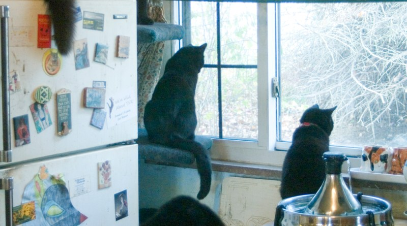 Five black cats watching birds.