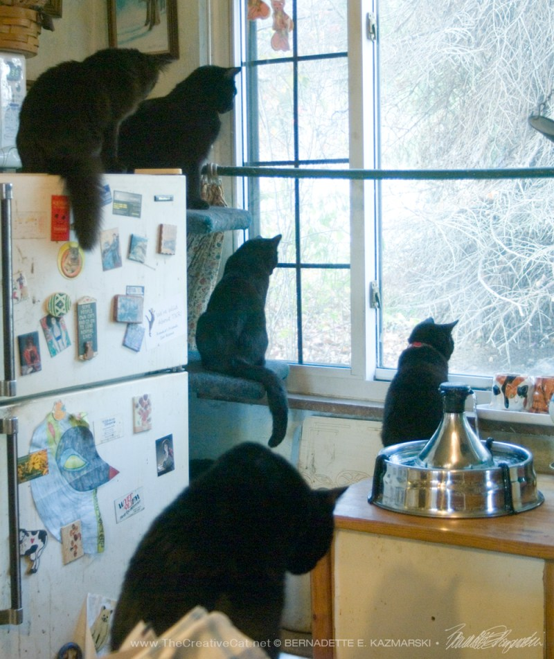Five black cats watching birds. Daily Cat Photo