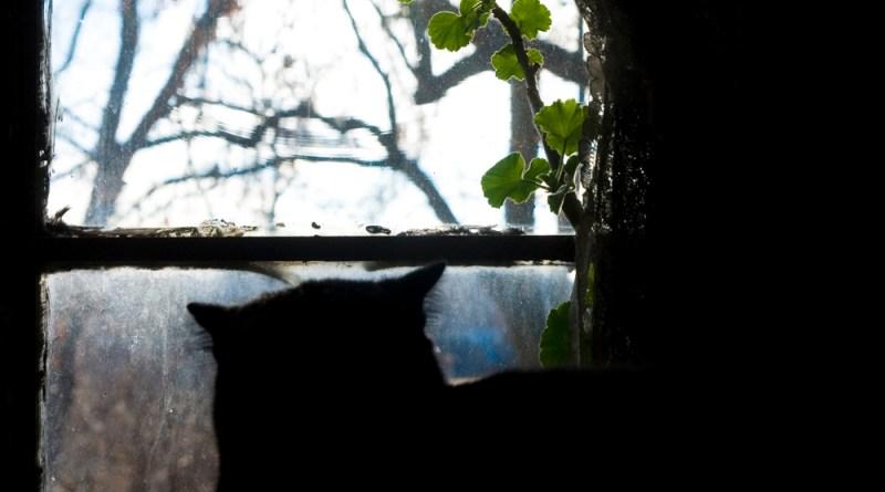 Bella enjoying her geranium.
