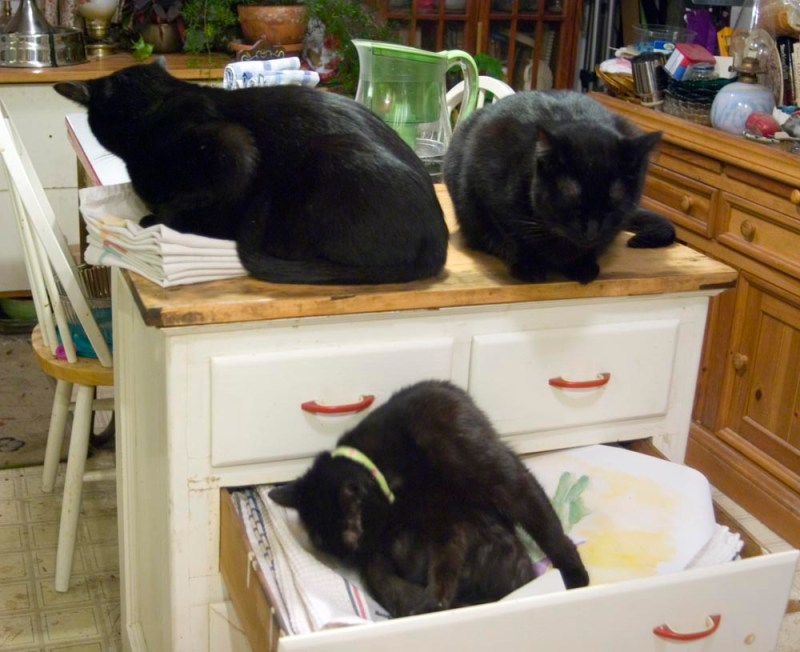 black cats in cabinet