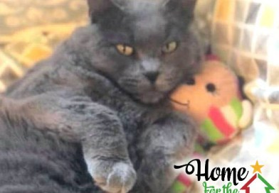 Cats for Adoption: Henrietta, Home for the Holidays
