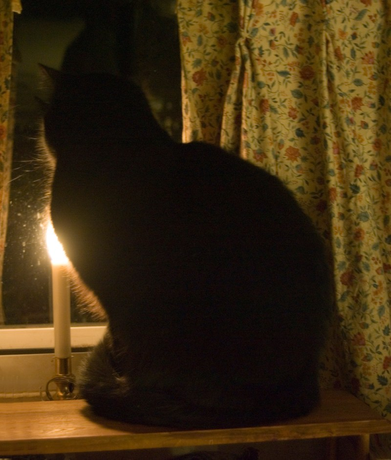 black cat with candle