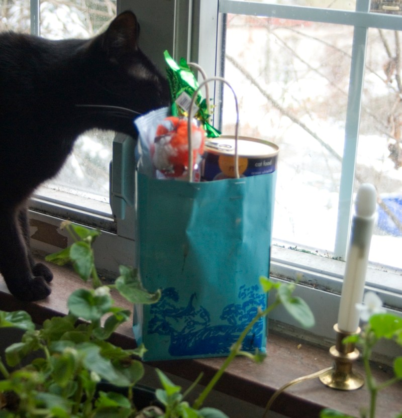 black cat with bag of stuff
