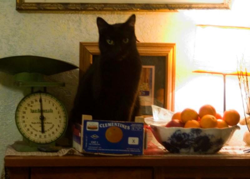 black cat with fruit bowls