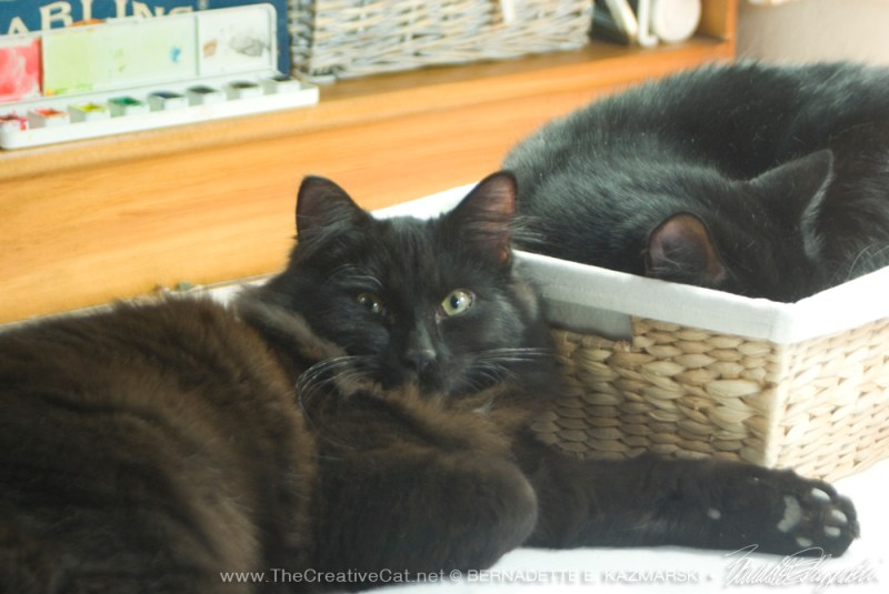 black kitten and black cat