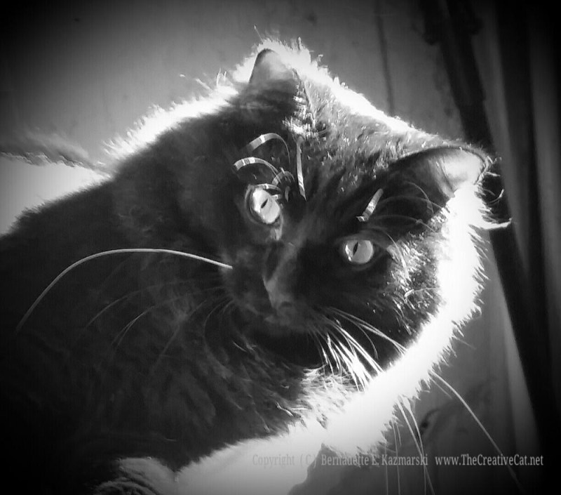 Basil in black and white.