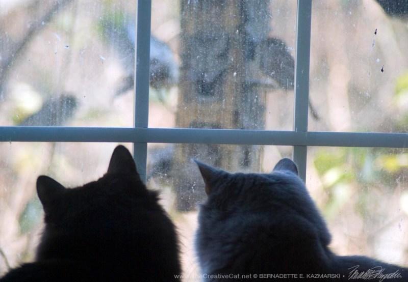 Boys are birdwatching.