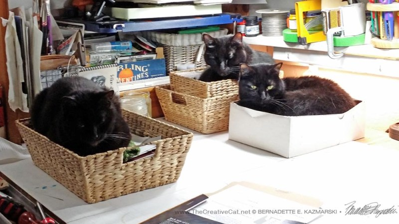 The original three, more or less happy in their baskets.