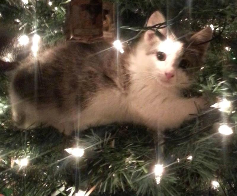 gray and white kitten in tree