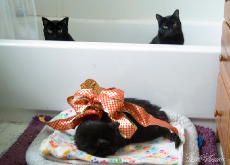 black cats in tub and on bed