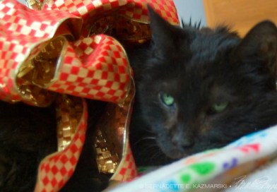 black cat with red bow