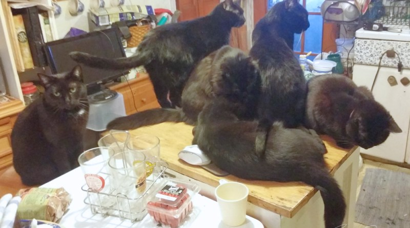 Six black cats!