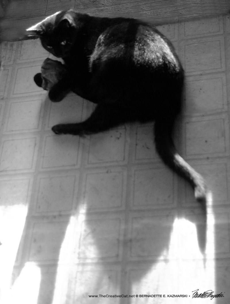 black cat with toy in sun