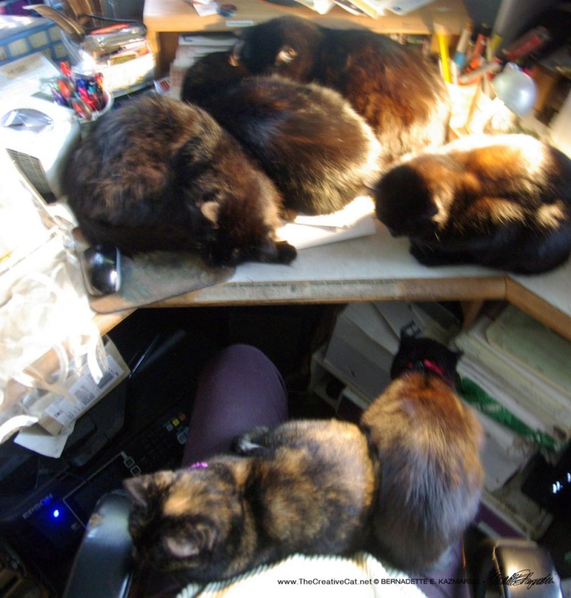 Six cats together.
