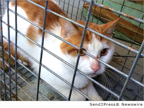 orange and white cat in trap