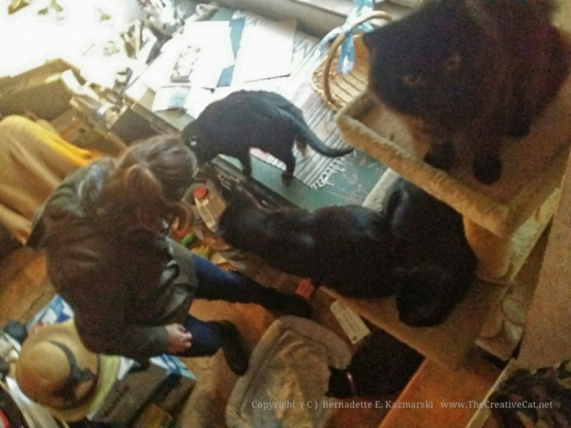 Five black cats greet Margo.