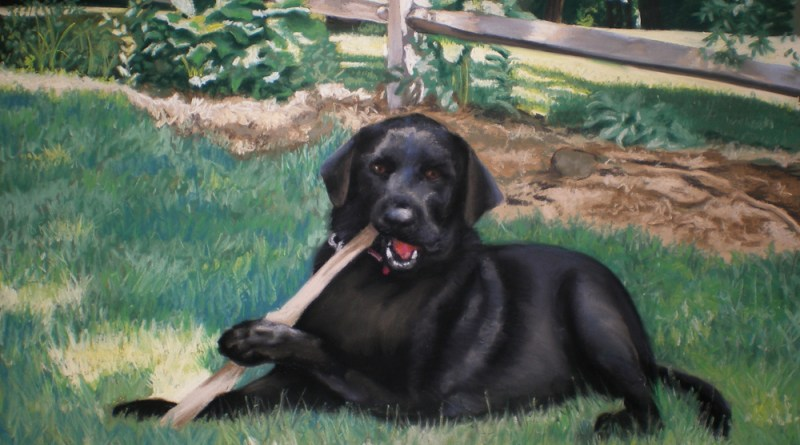 portrait of black lab
