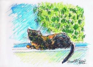 ink and watercolor pencil cat on widowsill