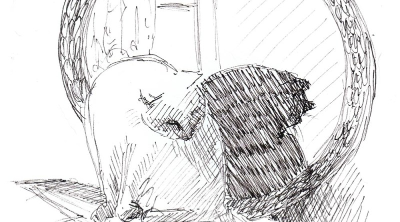 ink sketch of cat bathing in front of round mirror