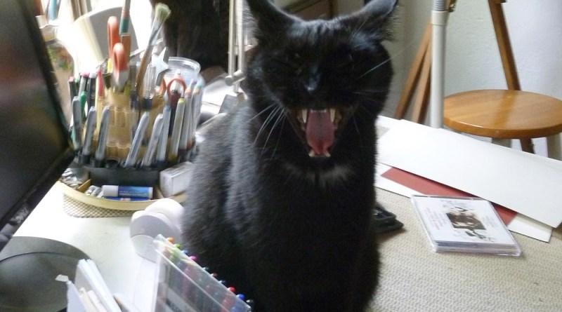 two black cats in studio