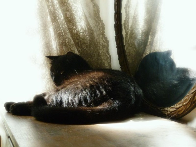 black cat in mirror with lace curtain
