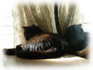 photo of black cat in mirror