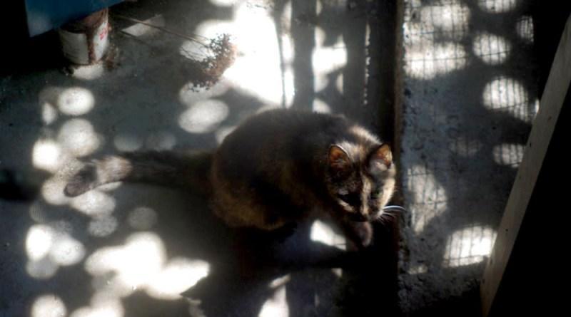 tortoiseshell cat in speckled sun