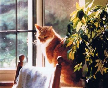 orange and white cat in teh sun