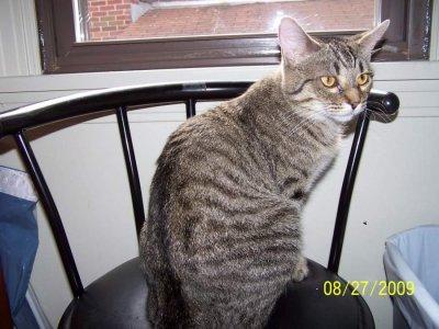 tabby cat on chair