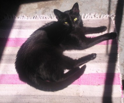 black cat on pink and gray rug