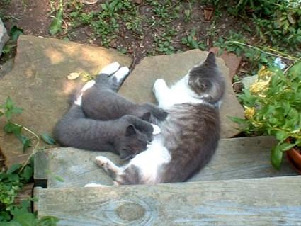 stray cat nursing kittens outdoors