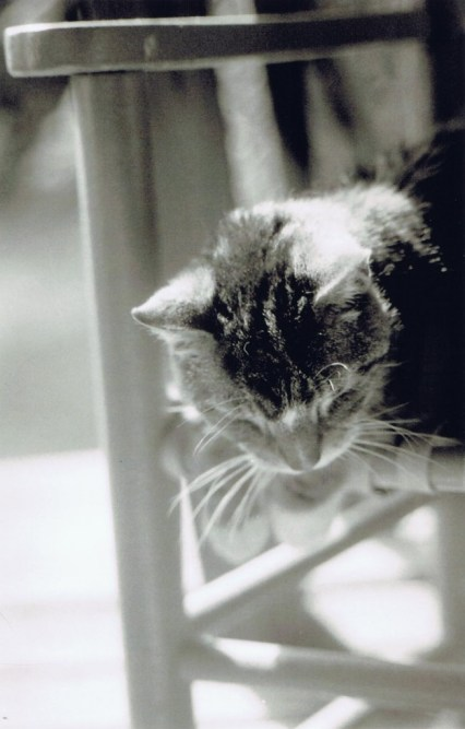 black and white photo of cat on chair
