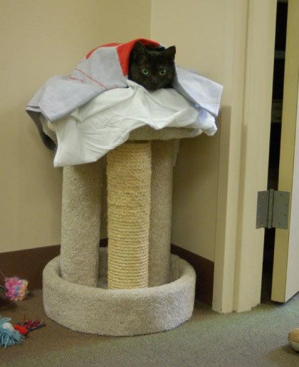 cat on cat tree