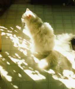 white cat in sun on floor