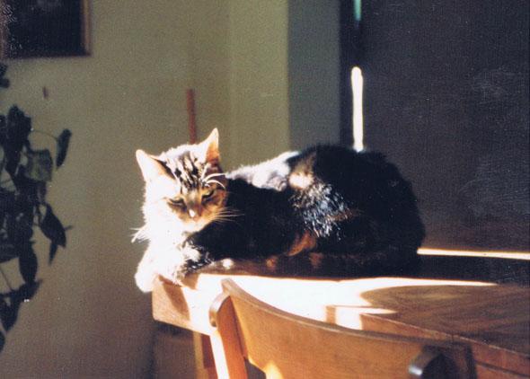 tabby cat on the table