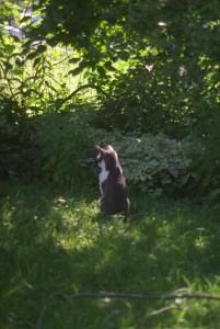 cat in back yard