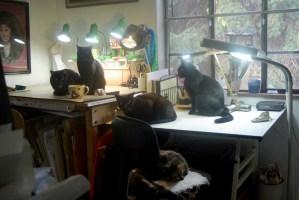 photo of five cats in studio