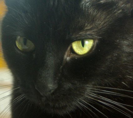 black cat with yellow eyes closeup