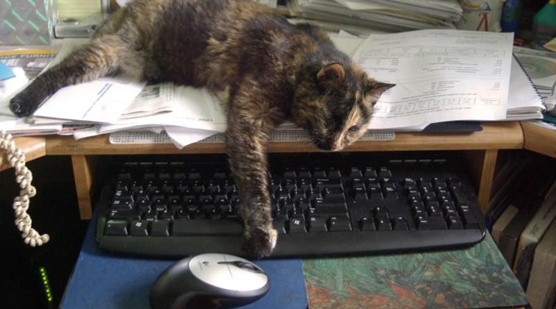 tortoiseshell cat blocking keyboard
