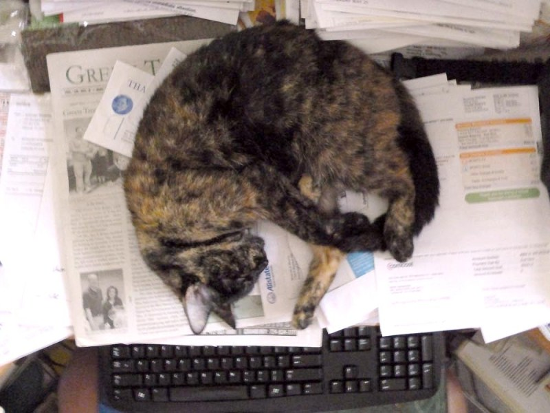 tortoiseshell cat sleeping on papers