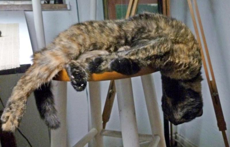tortoiseshell cat sleeping on stool