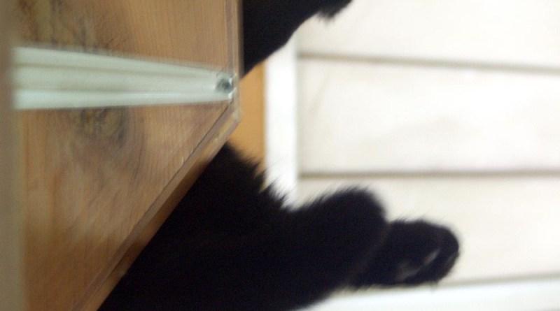 black cat paws on shelf