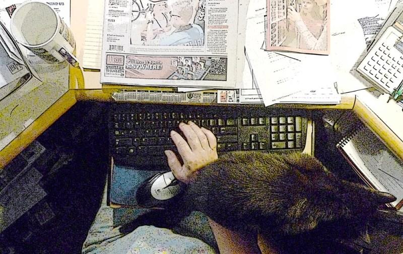 black cat on hand