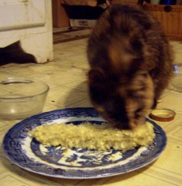 tortoiseshell cat chewing on corn cob