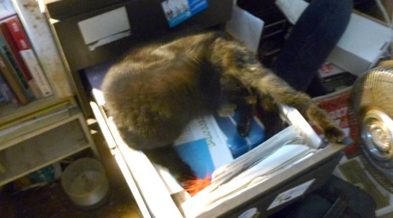 black cat in desk drawer