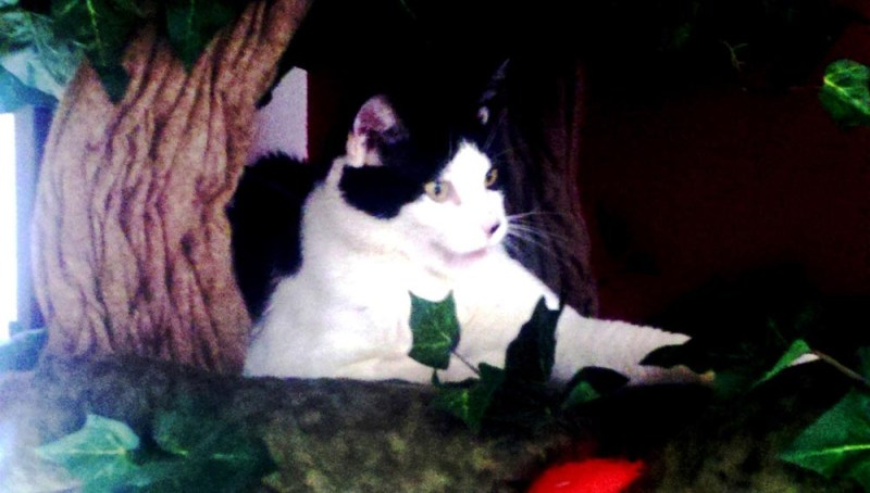black and whtie cat in cat bed