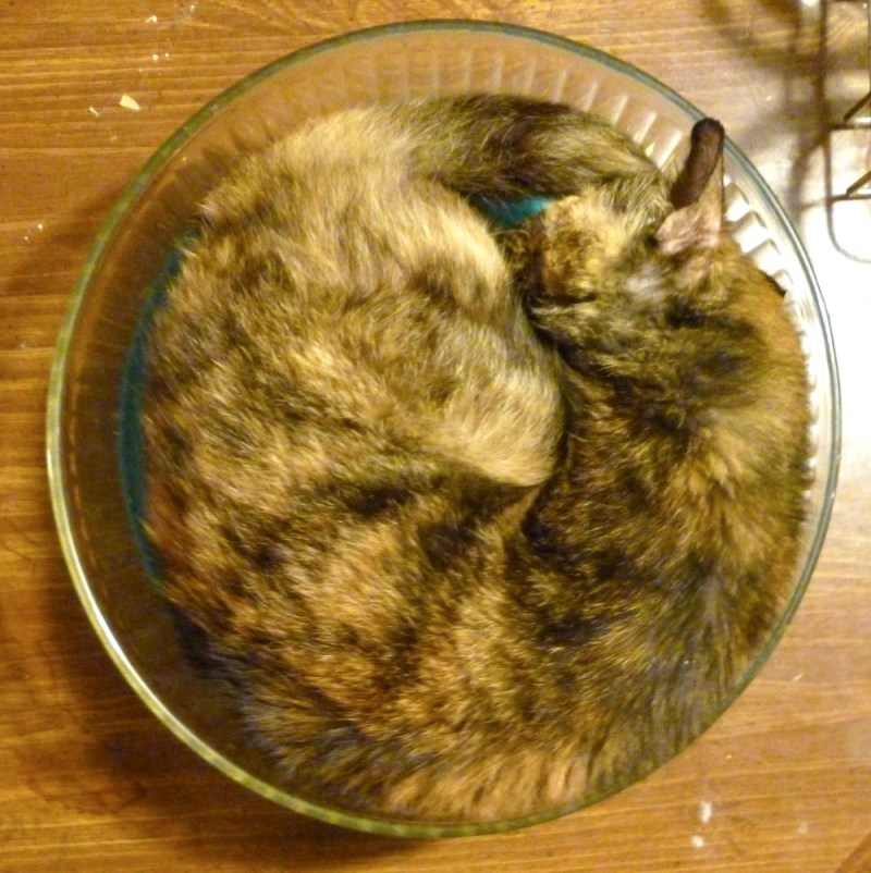 tortoiseshell cat in glass bowl