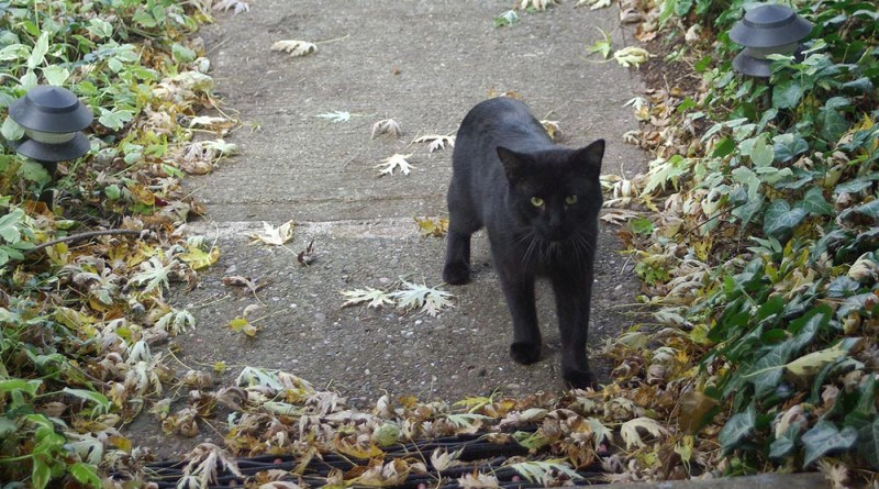black cat on sidewalk