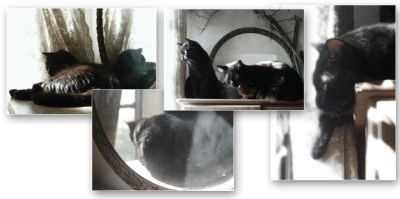 set of four sepia images of black cats