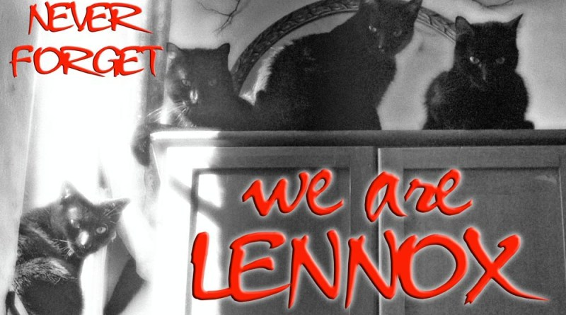 we are lennox four black cats
